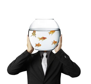 Goldfish microlearning